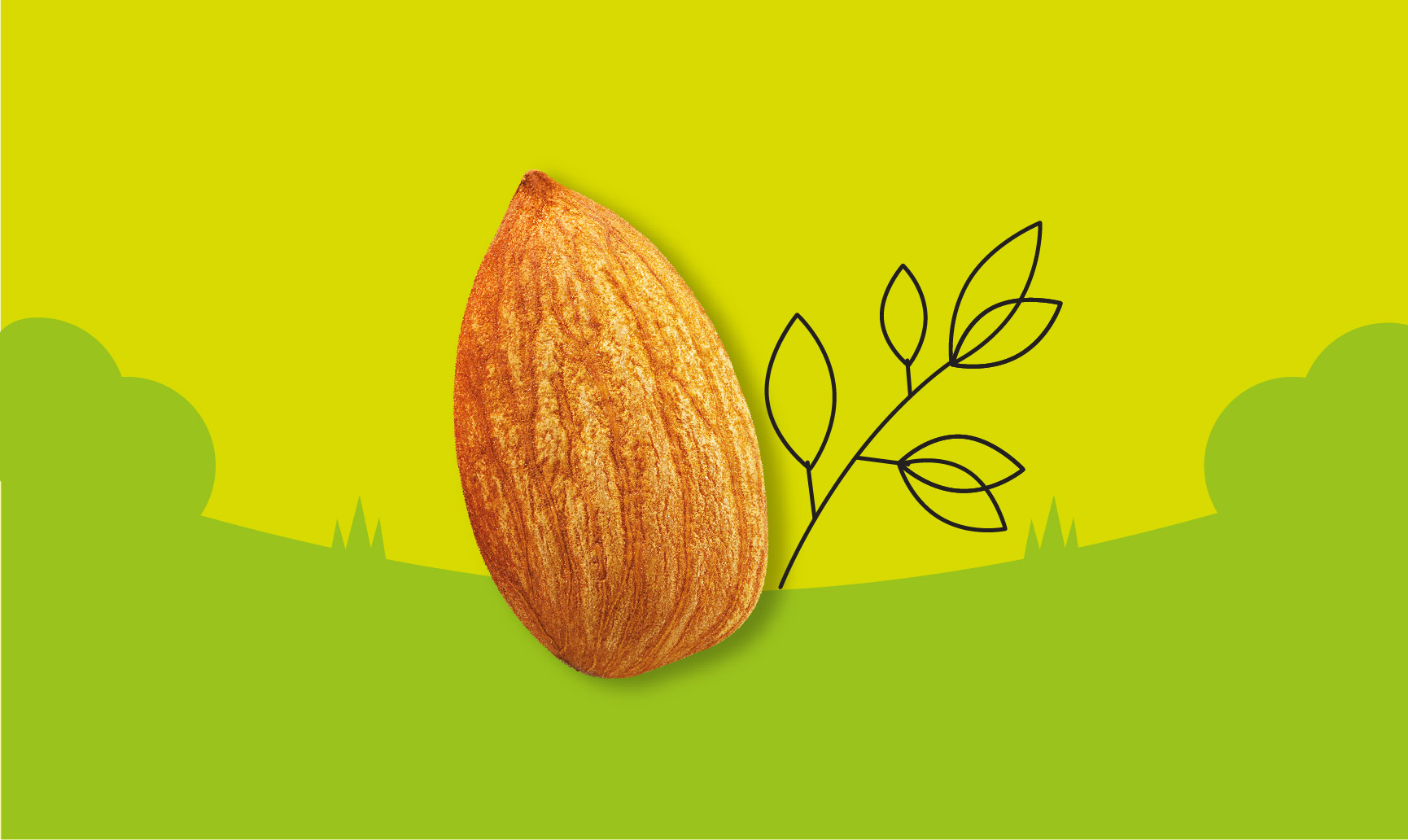 almond in nature graphic